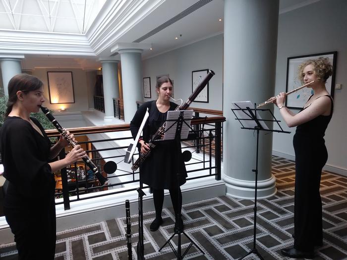 2. Ulmus Trio